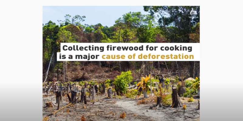 Cooking For Life – Deforestation